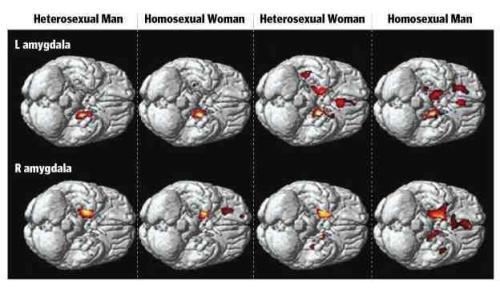 Homo Or Hetero  The Secular Mind-9751